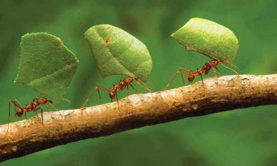 You are currently viewing Descubra como acabar com formigas e se livrar dessa praga
