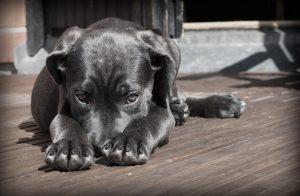 Read more about the article Como acabar com carrapatos do cachorro