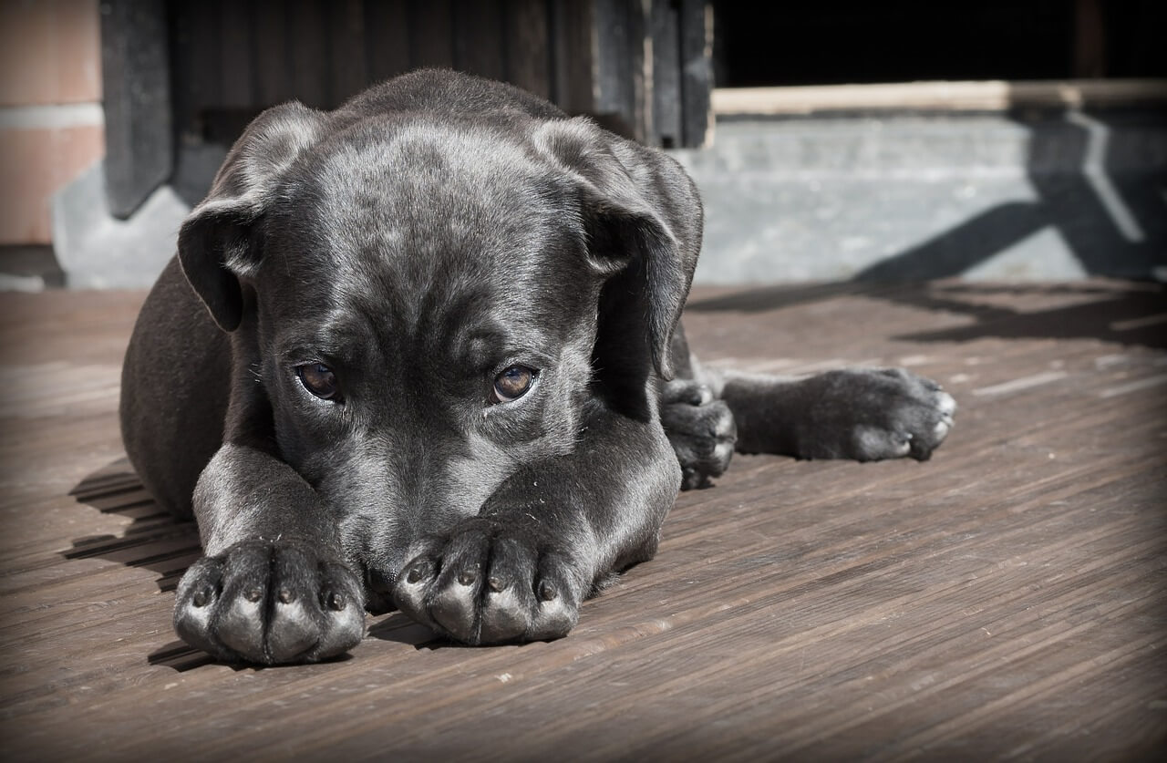 Como acabar com carrapatos do cachorro