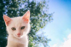 Top 3 Repelente Para Gatos