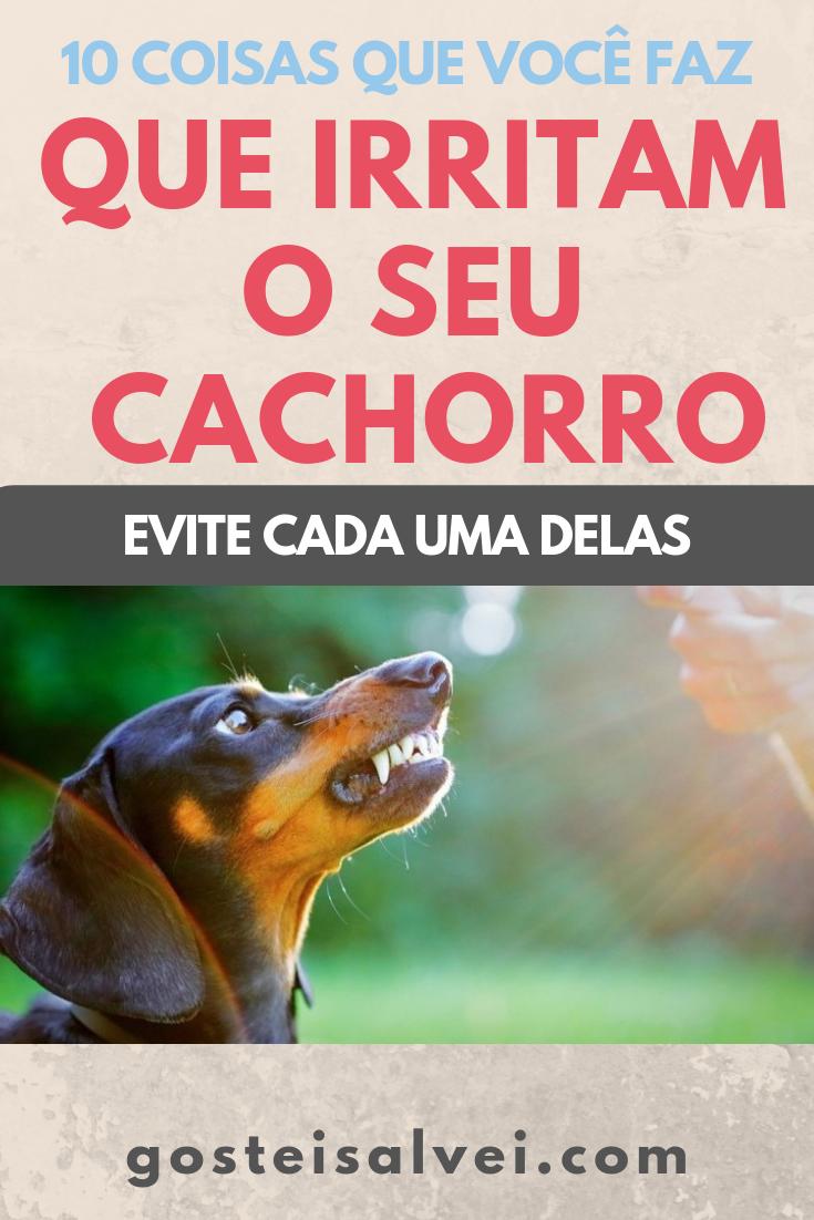You are currently viewing 10 Coisas Que Você Faz Que Irritam o Seu Cachorro – Evite Cada Uma Delas