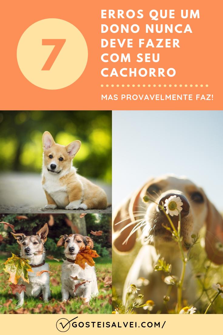 7 Erros Que Um Dono Nunca Deve Fazer Com Seu Cachorro e Que Provavelmente Faz!