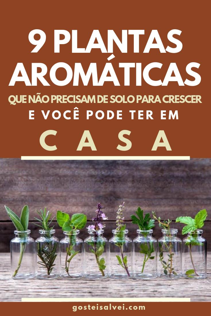 You are currently viewing 9 Plantas Aromáticas Que Não Precisam De Solo Para Crescer e Você Pode Ter Em Casa