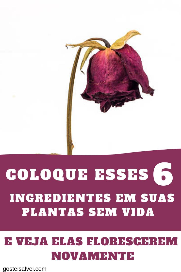 Coloque Esses 6 Ingredientes Em Suas Plantas Sem Vida e Veja Elas Florescerem Novamente