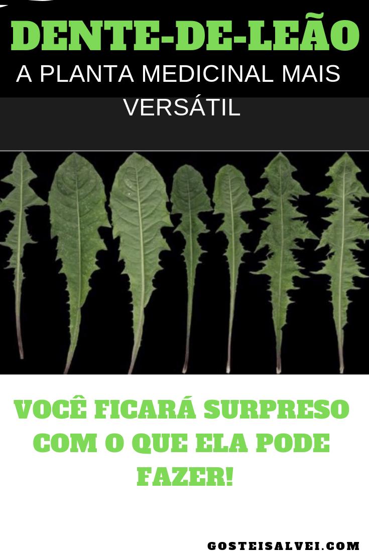 You are currently viewing Dente-de-Leão, a planta medicinal mais versátil, você ficará surpreso com o que ela pode fazer!