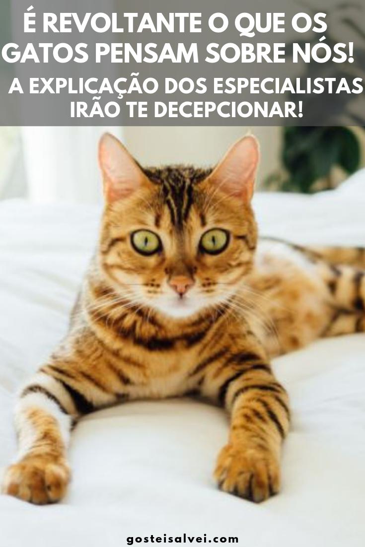 É Revoltante o Que Os Gatos Pensam Sobre Nós! A Explicação Dos Especialistas Irão Te Decepcionar!