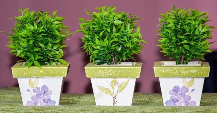 Esses São Os 4 Principais Benefícios De Ter Plantas Em Casa – Você Vai Se Surpreender
