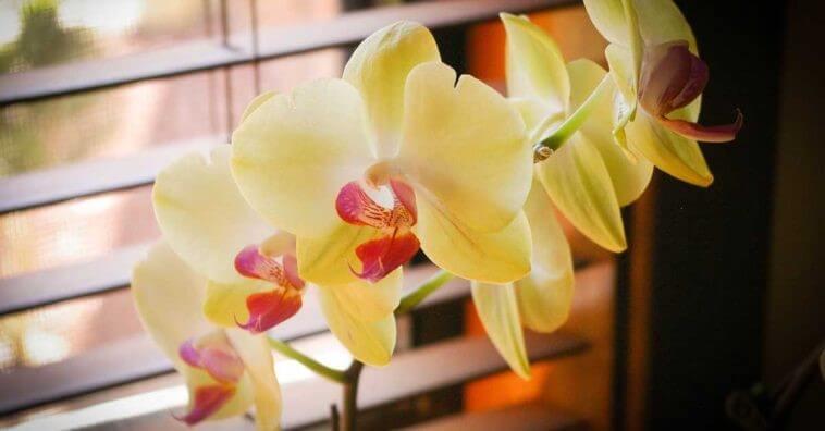 4 Flores Mais Duráveis Para Encher a Casa Com Vida e Cor