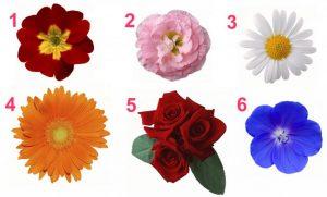 TESTE DA FEMINILIDADE: O que suas flores favoritas dizem sobre seu caráter e suas qualidades?