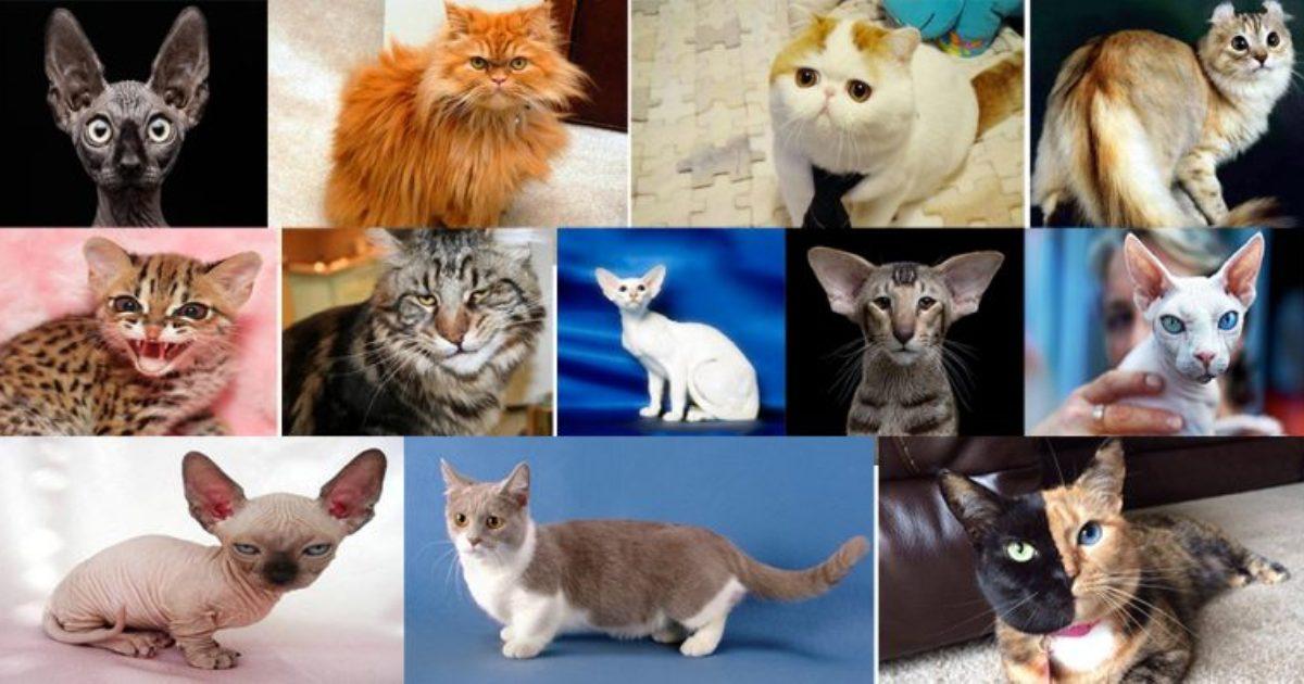 Escolha um gato e veja o que eles têm a dizer sobre você