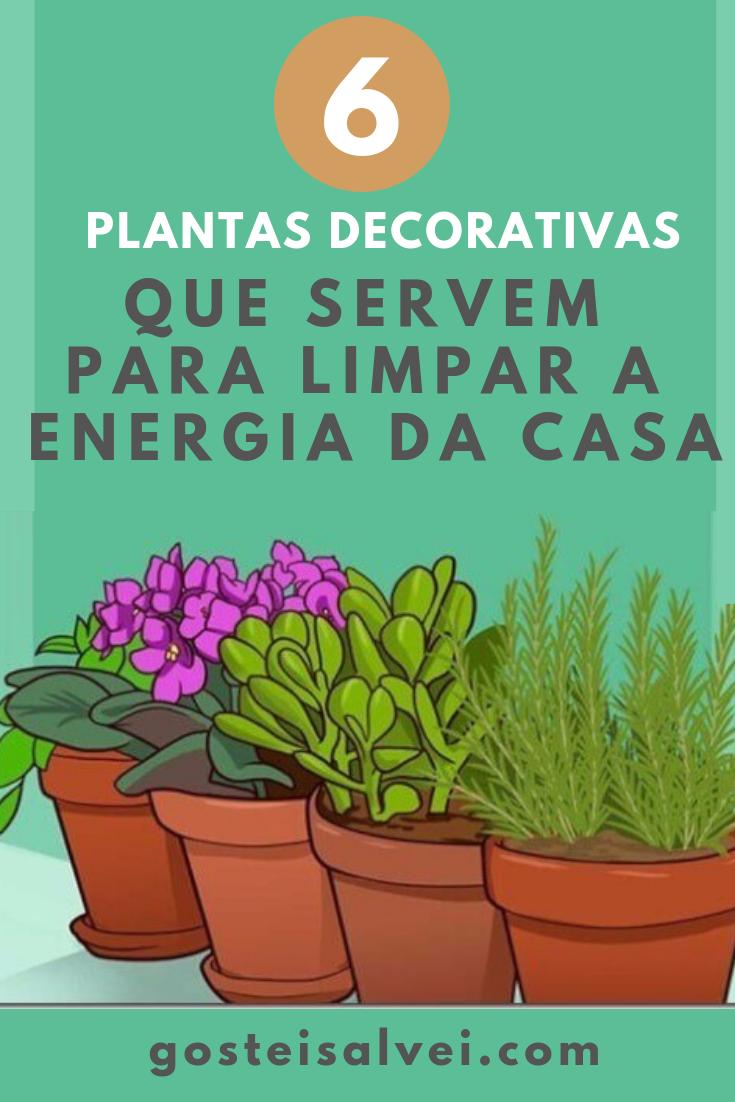 You are currently viewing 6 Plantas Decorativas Que Servem Para Limpar a Energia Da Casa