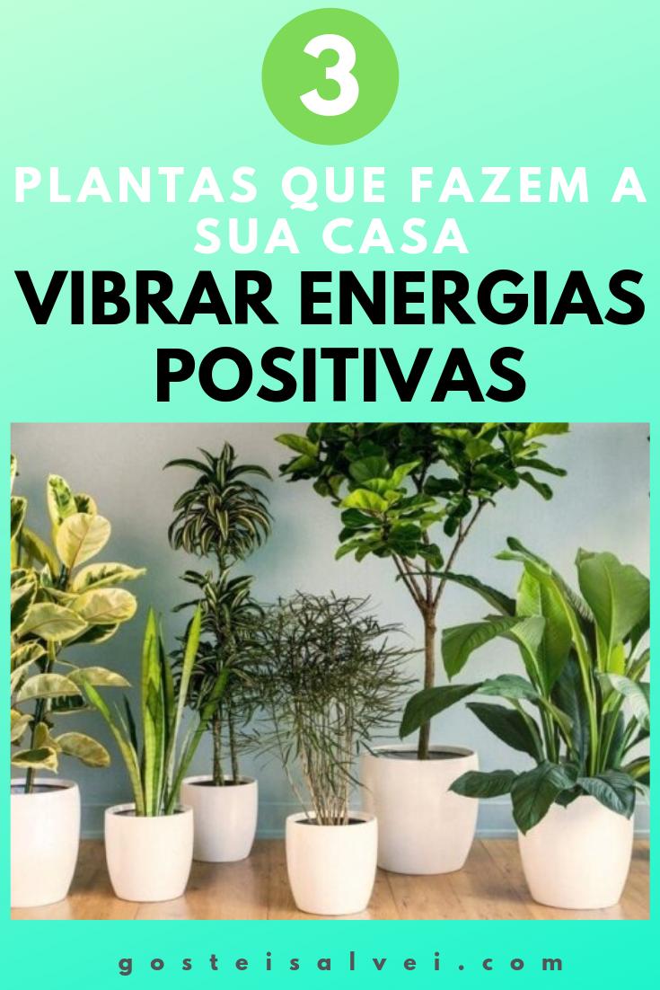 3 Plantas Que Fazem a Sua Casa Vibrar Energias Positivas