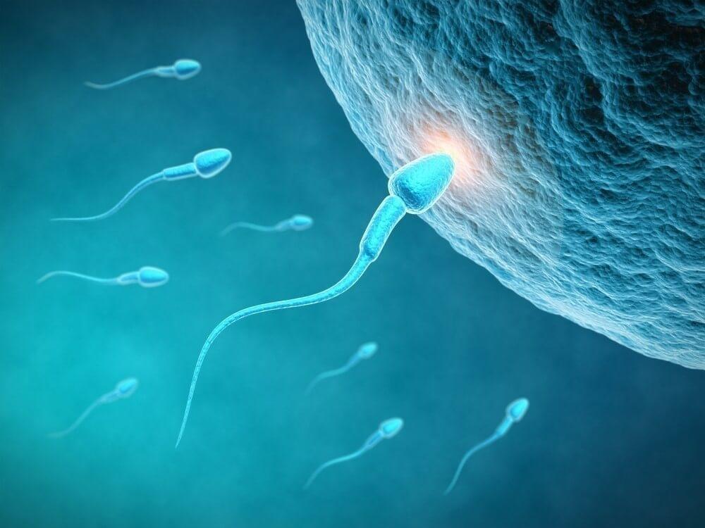 You are currently viewing Você Sabia Que Os Óvulos Selecionam o Esperma e Não o Contrário?