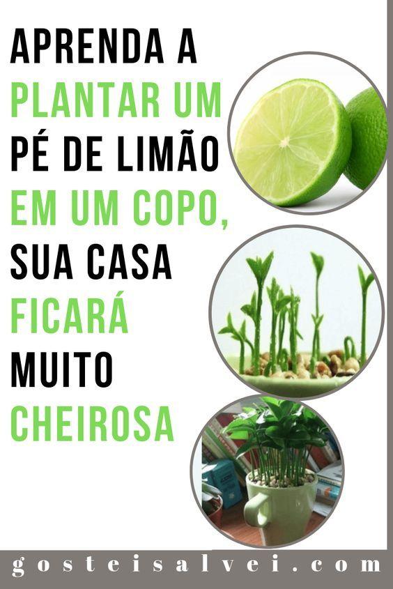 Aprenda a Plantar Um Pé De Limão Em Um Copo, Sua Casa Ficará Muito Cheirosa