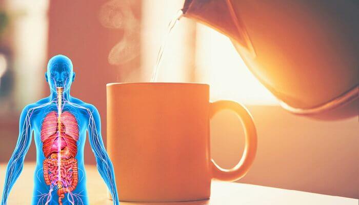 7 Benefícios De Beber Água Morna Com Estômago Vazio Toda Manhã