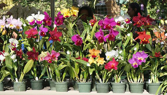 Esse é o Segredo Para Dar Vida Às Suas Orquídeas