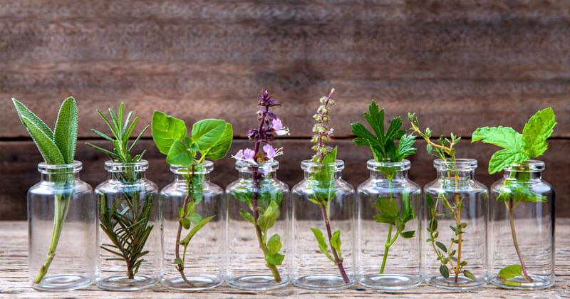 8 Ervas Que Você Pode Cultivar Dentro De Um Copo Com Água