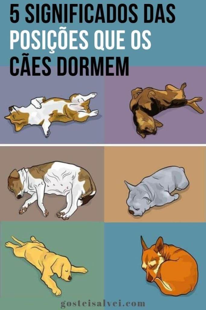 5 Significados Das Posições Que Os Cães Dormem