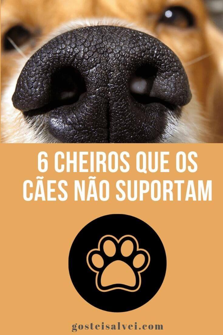 6 Cheiros Que Os Cães Não Suportam