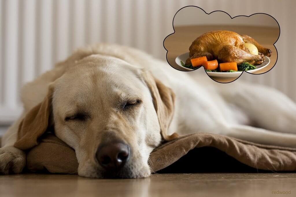 9 Alimentos Que Podem Matar o Seu Cachorro – Eles Jamais Podem Comer Isso