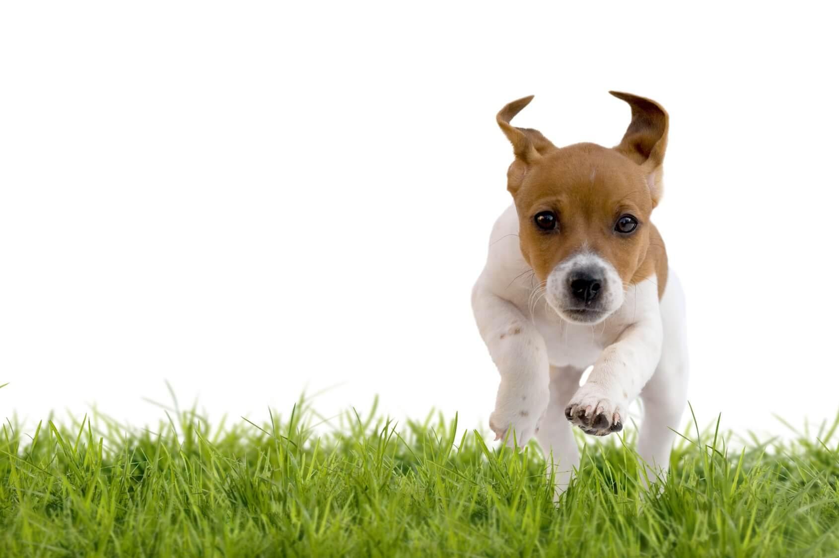 10 Coisas Que Você Com Certeza Faz Com Seu Cão e Você Deve Parar Imediatamente