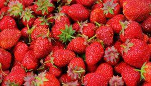 Por Que Tomates São Frutas e Morangos Não São?