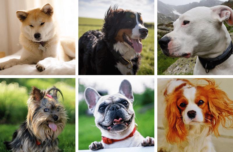 19 Cães Fabulosos que Custam uma Fortuna – Você Compraria?