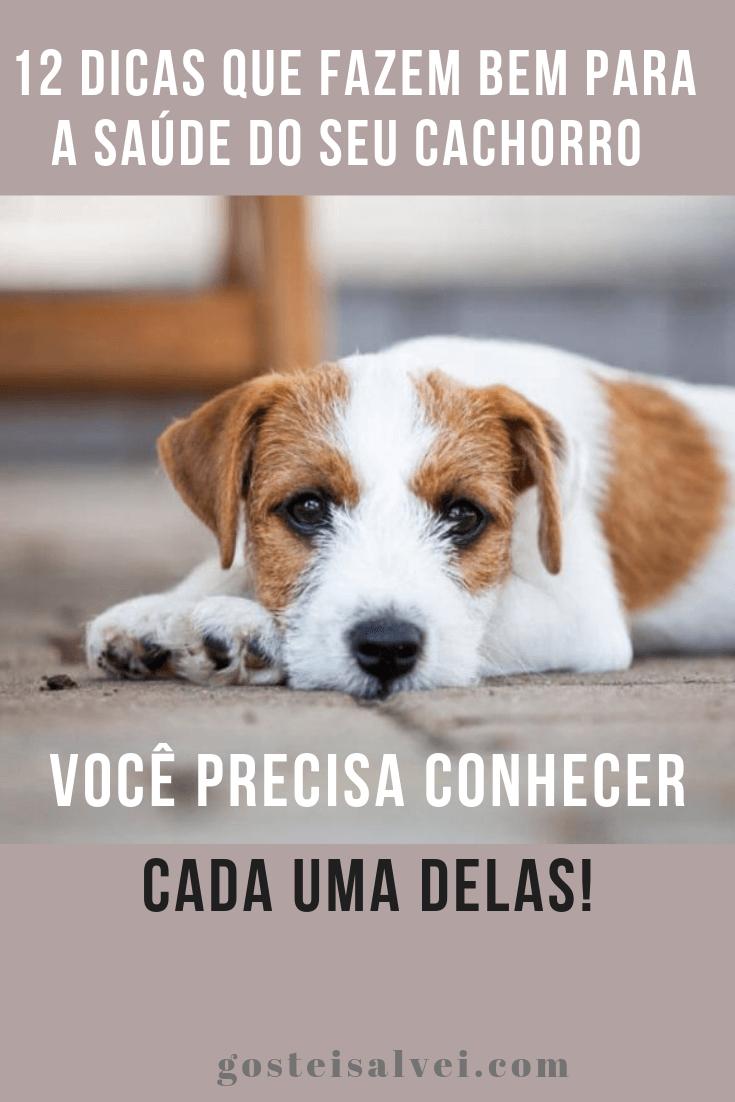 12 Dicas Que Fazem Bem Para a Saúde Do Seu Cachorro – Você Precisa Conhecer Cada Uma Delas!