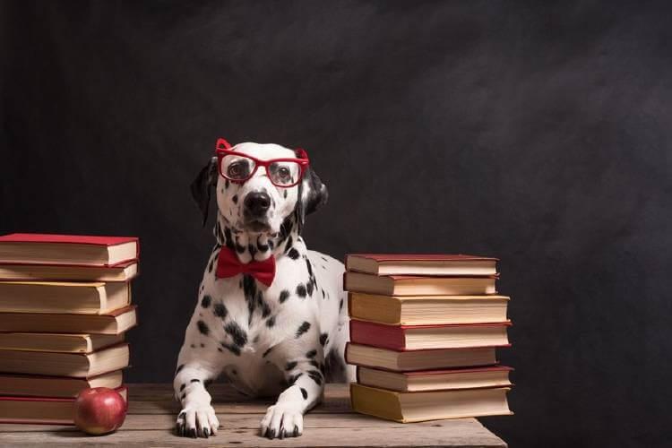 12 Sinais de que você tem um cachorro muito inteligente