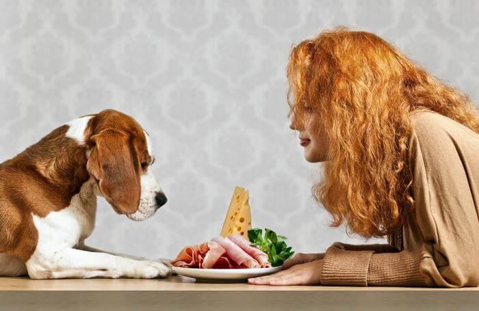 13 Alimentos Que Você Não Pode Dar Para Seu Cachorro Em Hipótese Alguma – O #9 é o Pior