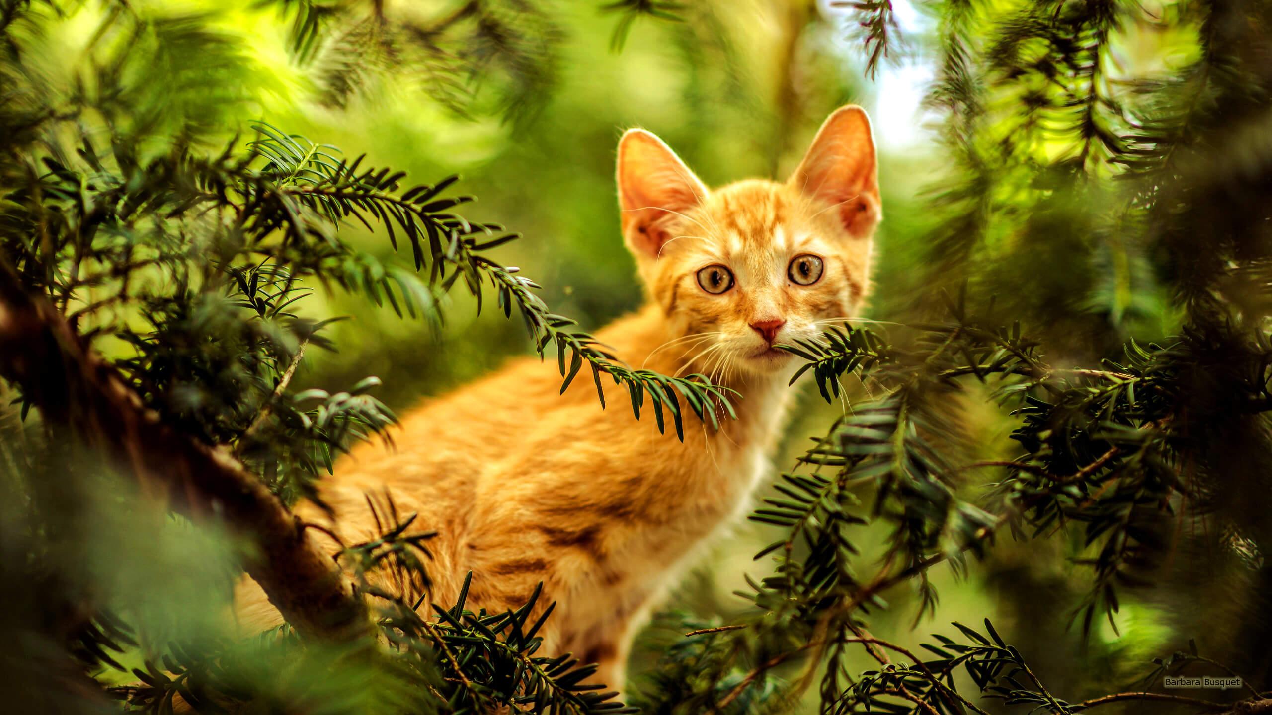 Uma Lenda Budista Sobre Gatos Que Todos Deveriam Ler