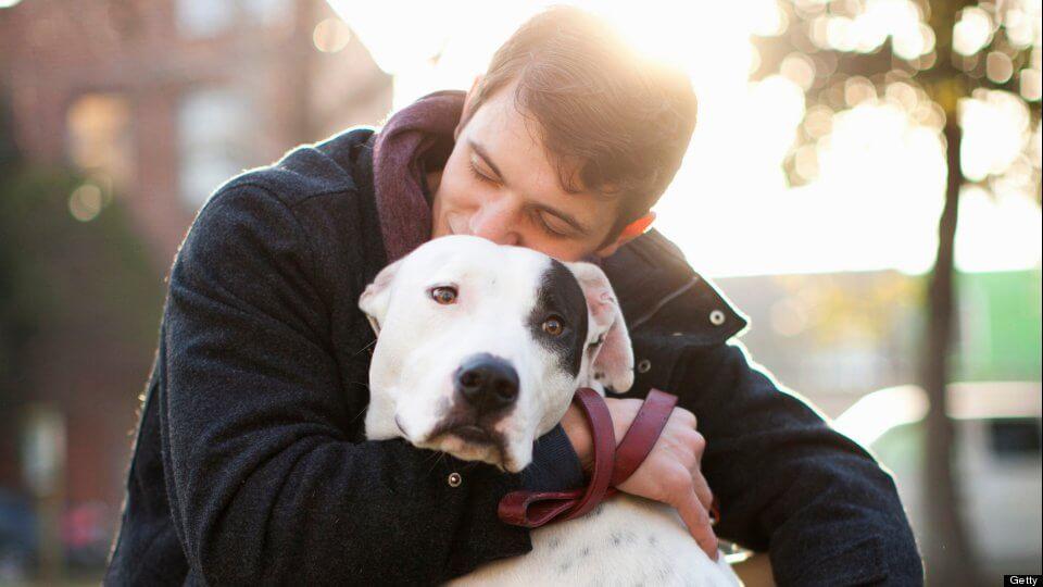 7 Sinais de que você ama seu cachorro de verdade – Você se identifica com algum desses sinais?