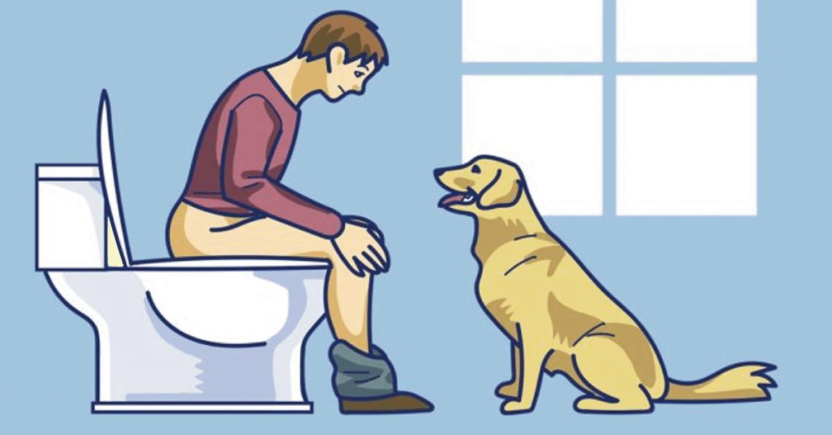 O seu cão te segue até o banheiro? Descubra o que ele quer dizer com isso!