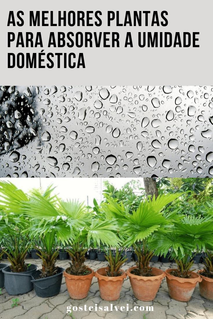 As melhores plantas para absorver a umidade doméstica