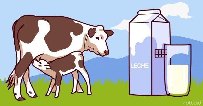 5 Motivos para parar de beber leite – O #4 é o pior