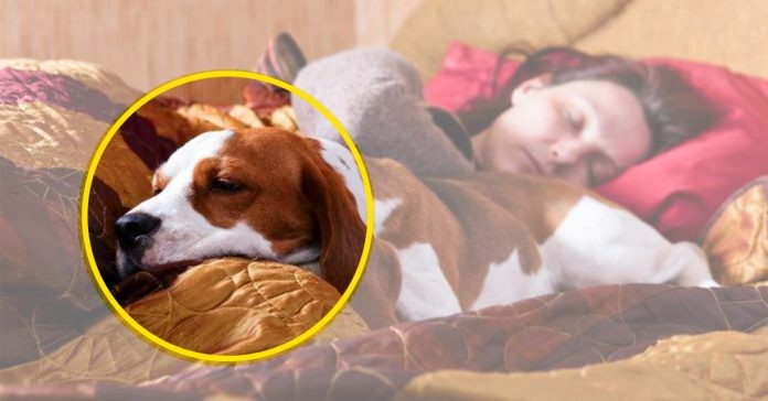 You are currently viewing 7 Motivos para compartilhar a cama com seu cão