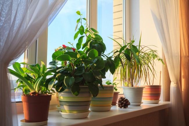 5 Plantas para colocar no seu quarto que ajudam a dormir melhor e descansar