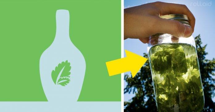 Descubra os incríveis benefícios que a hortelã pode ter para seu corpo e saúde