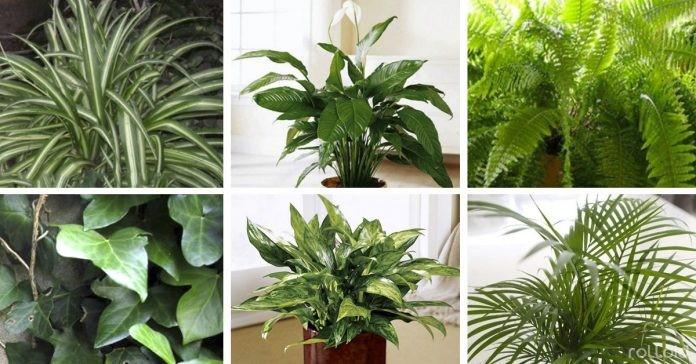 NASA revela 12 plantas essenciais que toda casa deve ter