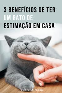 3 Benefícios de ter um gato de estimação em casa