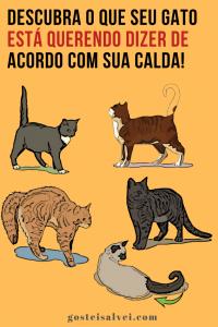 Descubra o que seu gato está querendo dizer de acordo com sua calda!