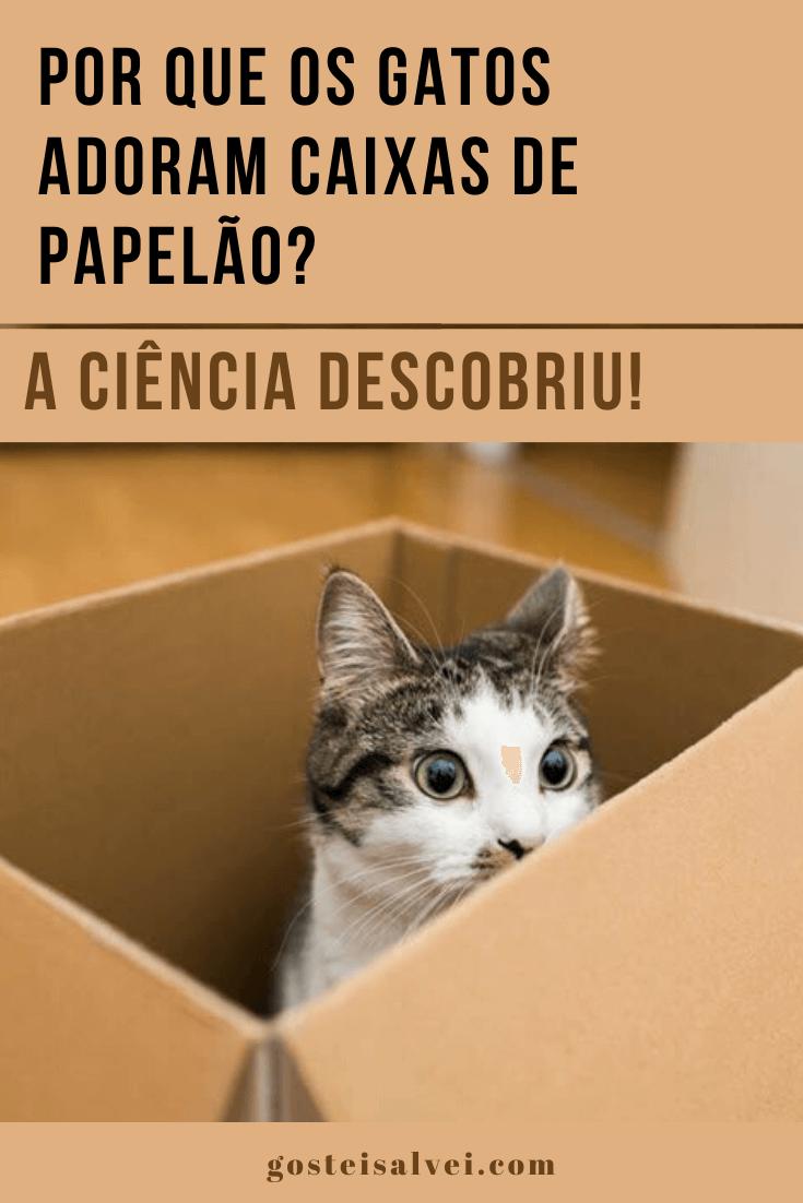 Por que os gatos adoram caixas de papelão? A ciência descobriu!