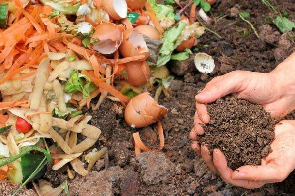 5 Receitas de fertilizantes naturais para suas plantas
