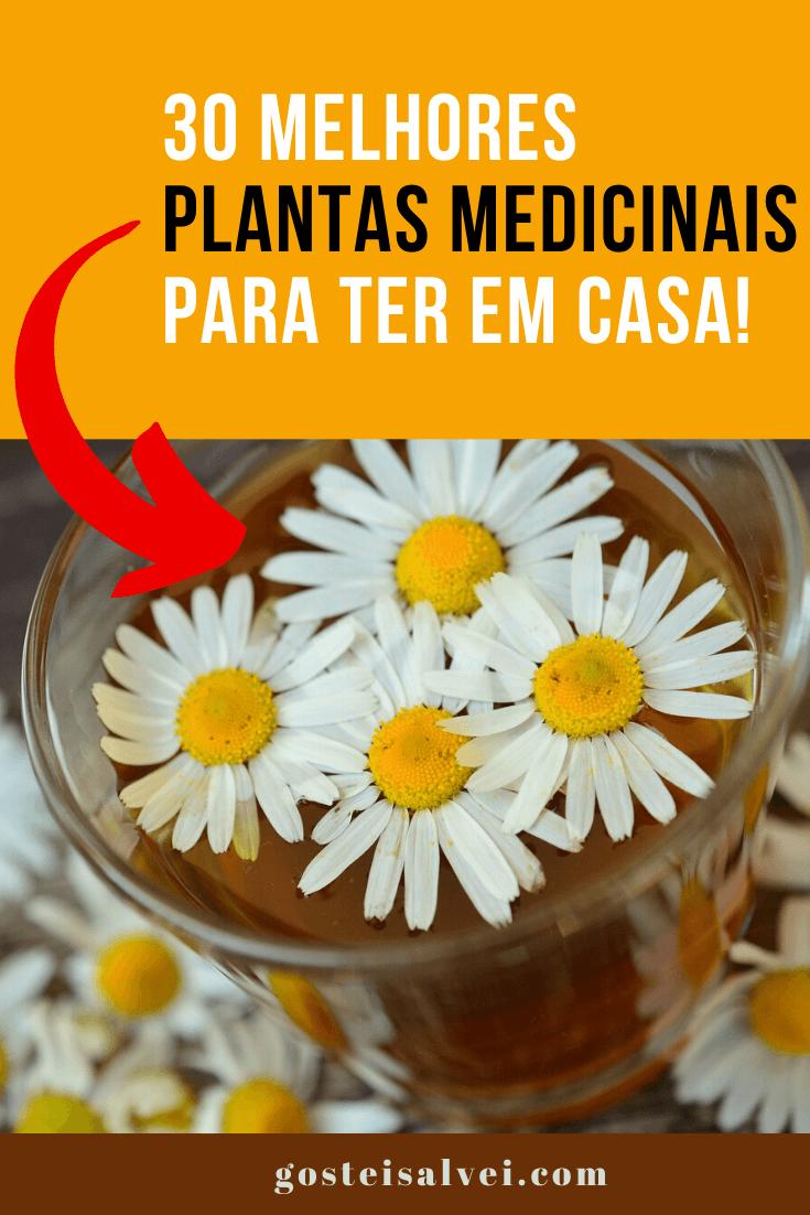 30 Melhores plantas medicinais para ter em casa!