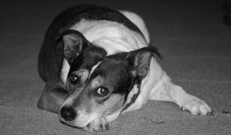 Animais de estimação: COMPRAR ou ADOTAR? Qual é a diferença?