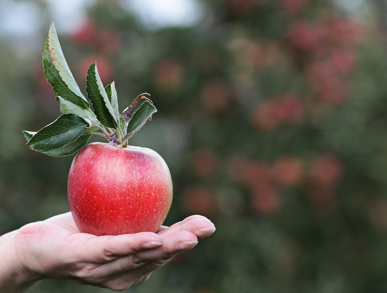 Comer uma maçã por dia faz bem? Descubra os benefícios!
