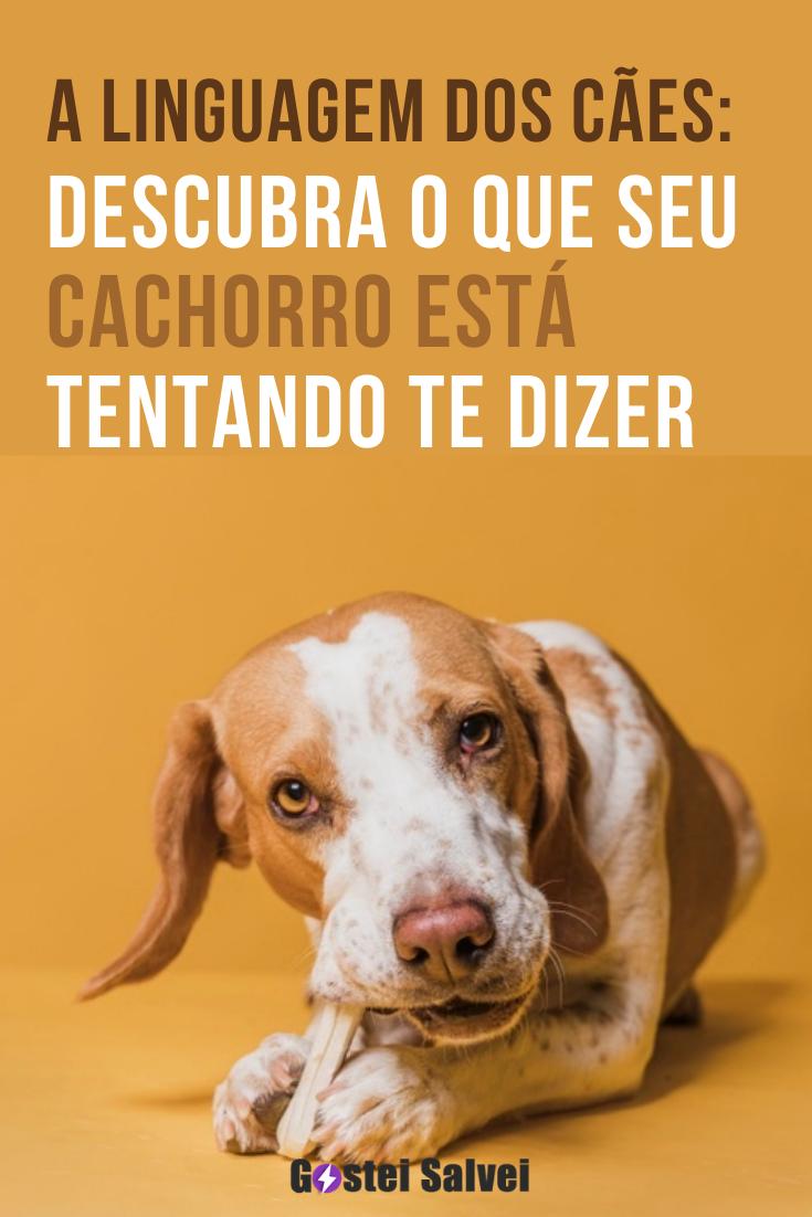 A linguagem dos cães: Descubra o que seu cachorro está tentando te dizer