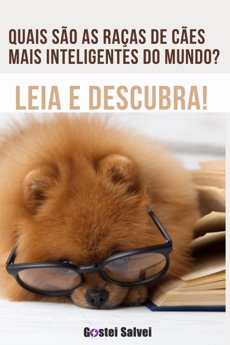 Quais são as raças de cães mais inteligentes do mundo? Leia e descubra!