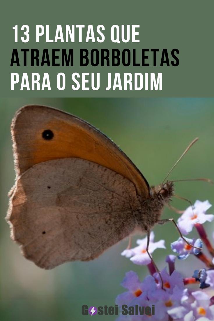 13 Plantas que atraem borboletas para o seu jardim