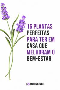 16 Plantas perfeitas para ter em casa que melhoram o bem-estar